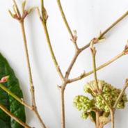 Sleeping Beauties: Tuinplanten van de maand januari