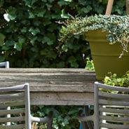 Tuinplant van de Maand maart: Hedera