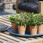 Hebe: Tuinplant van de maand augustus